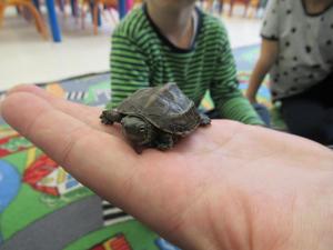 Żółw u trzylatków.
