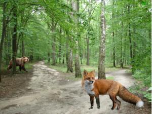 zwierzęta w lesie MP